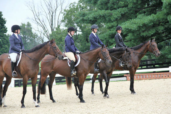 adopted horse class at New Vocations Horse show 2018