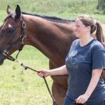 Dusk to Dawn at Thoroughbred Retirement Foundation's summer farm in Saratoga Springs
