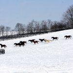 winter scene suzie oldham