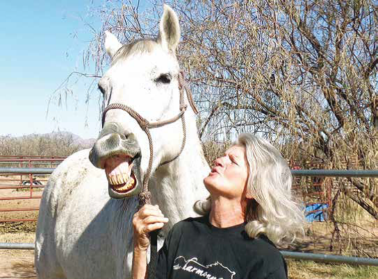 Harmony & Hope Horse Haven