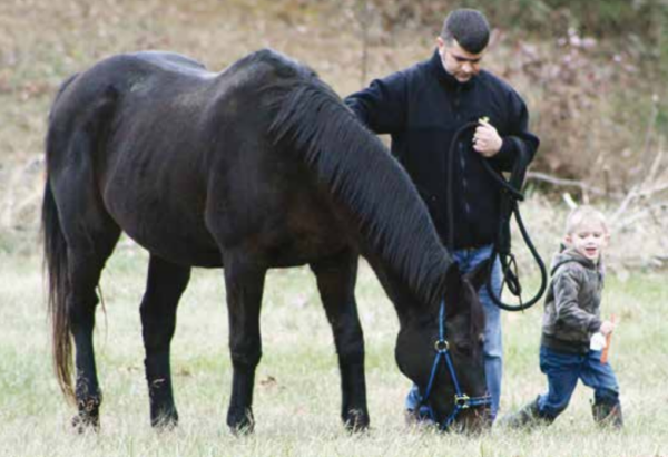 War Horses at Rose Bower