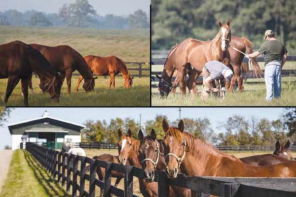 Susan S. Donaldson Foundation/Mereworth Farm