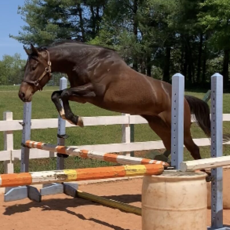 you betcha free jump