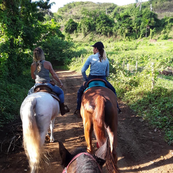 trail ride at caribbean Thoroughbred aftercare