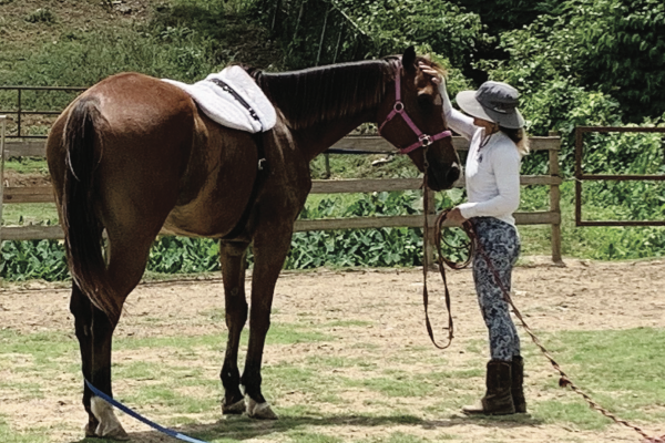 Caribbean Thoroughbred Aftercare