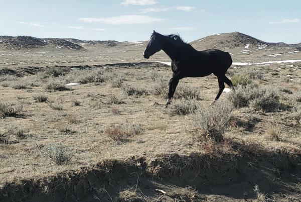 Center for Racehorse Retraining