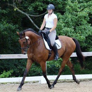Tricky G under saddle with Kayla Covolesky
