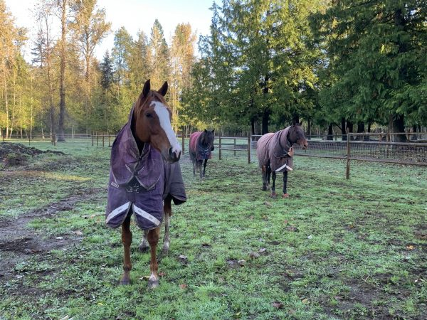 Little Brown Derby OTTB herd